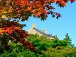 紅葉越しの東大寺大仏殿